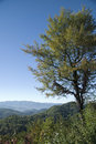 Free Tree And Smoky Mountains Stock Photo - 6878480
