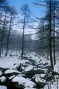 Free Snow Forest In Winter Stock Image - 6879211