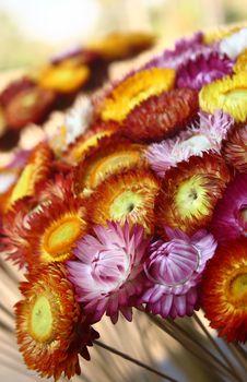 Free Thai Flowers Stock Photo - 6870100