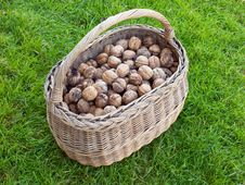 Free Basket Of Walnut Royalty Free Stock Image - 6870246