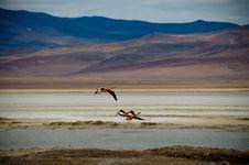 Free Flamingo Stock Photography - 6870722