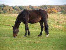 Free Horse Stock Photos - 6870843