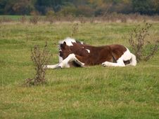 Free Foal Getting Up 1 Royalty Free Stock Image - 6870866