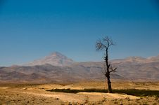 Free Desert Tree Stock Photo - 6870870