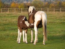 Mother And Baby Horse Stock Photo
