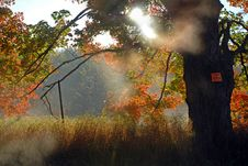 Free Autumn Mist Stock Photography - 6871152