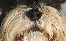 Free Dog S Snout In Winter Royalty Free Stock Images - 6871199