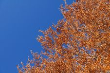 Abruzzo Autumn Trees Stock Photography