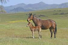 Free Mare And Filly Stock Images - 6872344