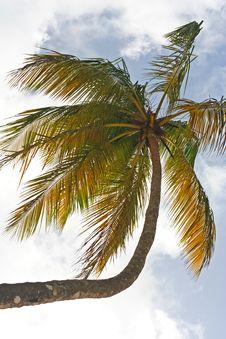 Upward Perspective Of Palm Tree Stock Image