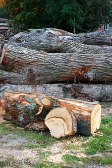 Free Peeled Log Stock Images - 6873374