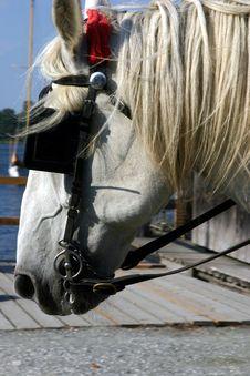Free Cart Horse Stock Photo - 6873990