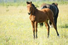 Free Foal Royalty Free Stock Image - 6874566