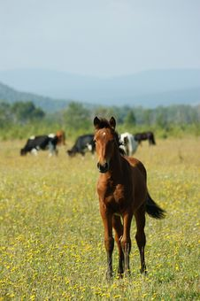 Free Foal Stock Photo - 6874650