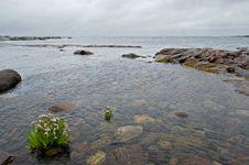 Free White Sea Landscape Royalty Free Stock Image - 6874716