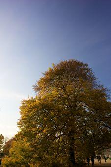 Free Autumn Tree Royalty Free Stock Photos - 6876088