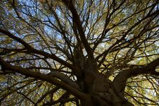 Free Autumn Tree Royalty Free Stock Image - 6876126