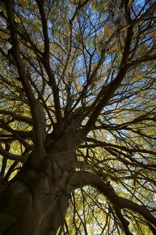 Free Autumn Tree Detail Royalty Free Stock Photos - 6876138