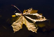 Free Autumn Puddle Stock Images - 6876374