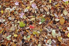 Free Colorful Fall Leaves Royalty Free Stock Images - 6876489