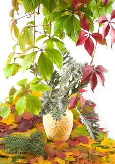 Free Autumn Bouquet In Yellow Vase Royalty Free Stock Photo - 6876635