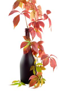 Free Bottle With Wine And Rod Stock Image - 6876741