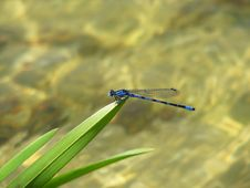 Free Rest Of A Dragonfly Royalty Free Stock Images - 6877209