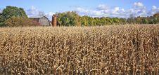 Free Farmouse Amidst Golden Cornfield Royalty Free Stock Photos - 6878158