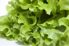 Free Green Salad Royalty Free Stock Photos - 6878218