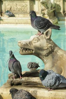 Free Fonte Gaia In Siena, With Pigeons Royalty Free Stock Photo - 6878285