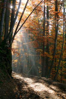 Free Ray Of Light Stock Image - 6878491