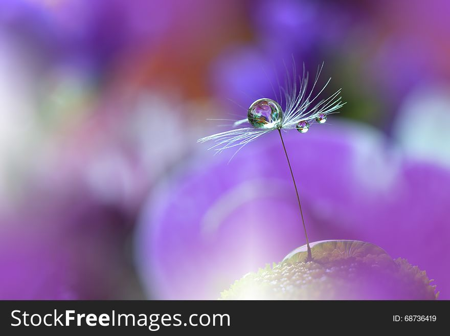 Dandelion And Purple Colorful Background Beautiful Nature Photography Web Banner Drops Colors Copy Space Concept Free Stock Images Photos 68736419 Stockfreeimages Com