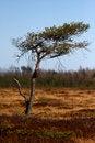 Free Safari Tree In Meadow Stock Photo - 6882540