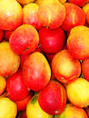 Free Mangoes Royalty Free Stock Photos - 6884338