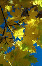 Free Sun In Autumn Leaves-3 Stock Photos - 6887743