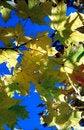 Free Sun In Autumn Leaves-1 Stock Photo - 6887780