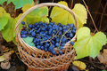 Free Woven Basket With Grapes Stock Images - 6888314