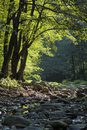 Free Dried-up Watercourse In The Forest. Stock Photography - 6889672