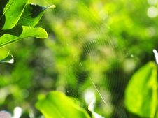 Free Spider Web Stock Photo - 6880440