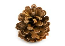 Free Pine Cone Royalty Free Stock Photos - 6880798