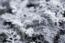 Free Winter Flower Stock Photos - 6881163