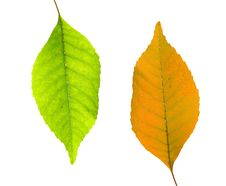 Free Green And Yellow Leaves Stock Image - 6883641