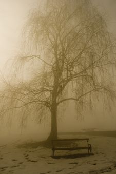Free Winter Tree In Fog Stock Photo - 6883800