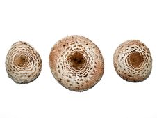 Free Mushroom Caps Royalty Free Stock Image - 6883916