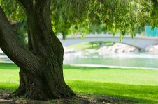 Free Tree Photos In A Park Stock Images - 6884434