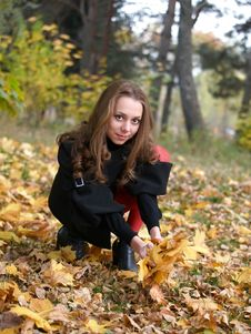 Gathering Maple Leaves In Autumn Forest. Stock Photo