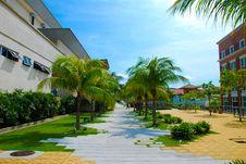 Free Walkway Through Palm Trees Stock Photo - 6886270