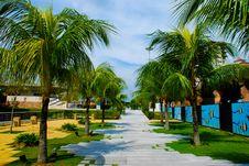 Free Walkway Through Palm Trees Stock Photo - 6886280