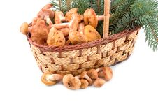 Free Honey Agarics At Yellow Basket Stock Images - 6886824