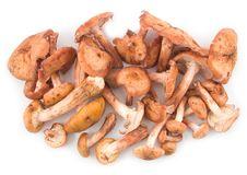 Free Honey Agarics Ripe And Edible Royalty Free Stock Image - 6886826